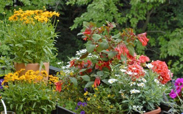Balkon w kwiatach - polecamy najlepsze kwitnące rośliny na balkon!